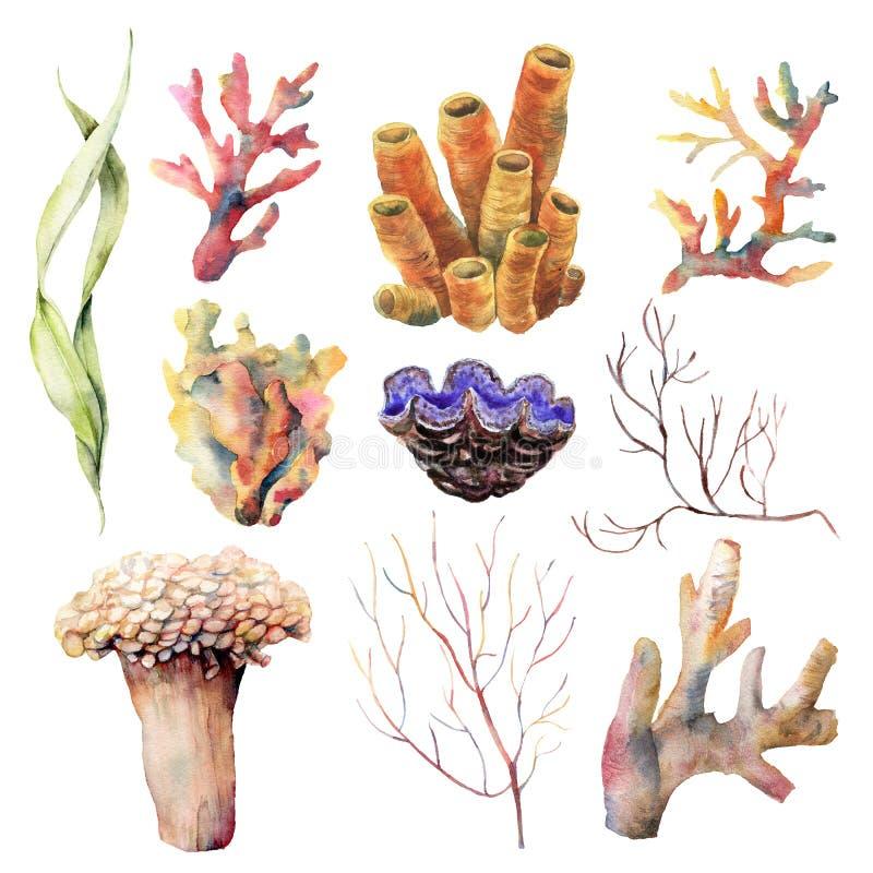 Vattenfärgen ställde in med växter och djur för korallrev Handen målade undervattens- filialer och skalet som isolerades på vit stock illustrationer