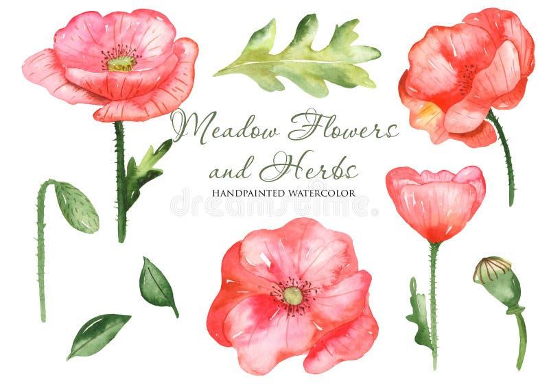 Vattenfärgen ställde in med vildblommavallmo, sidor, blommor Botanisk uppsättning för blomma på en vit bakgrund royaltyfri illustrationer