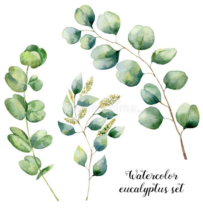 Vattenfärgeukalyptusuppsättning Den målade handen eukalyptusbeståndsdelar för den behandla som ett barn, kärnade ur och silverdol vektor illustrationer