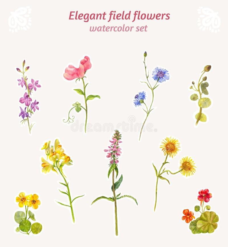 Vattenfärgfältblommor Upps?ttning av eleganta blom- best?ndsdelar vektor illustrationer