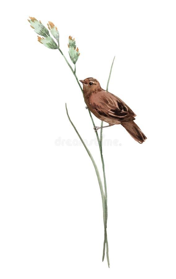 Vattenfärgfågel på blomman vektor illustrationer