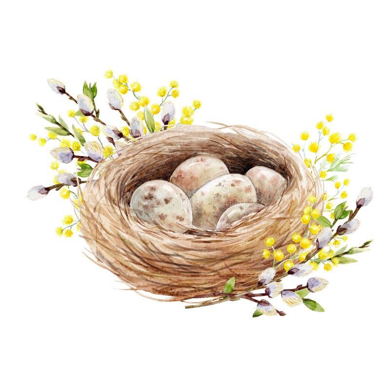 Vattenfärgfågelrede med ägg stock illustrationer
