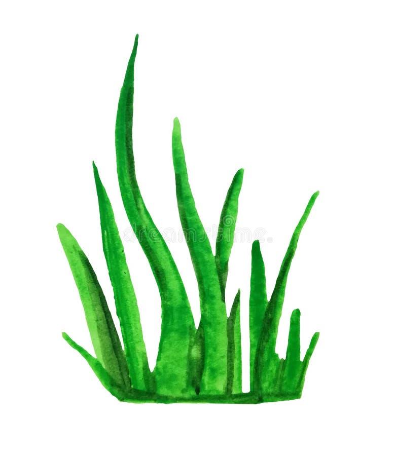 Vattenfärggräs på vit bacground royaltyfri illustrationer