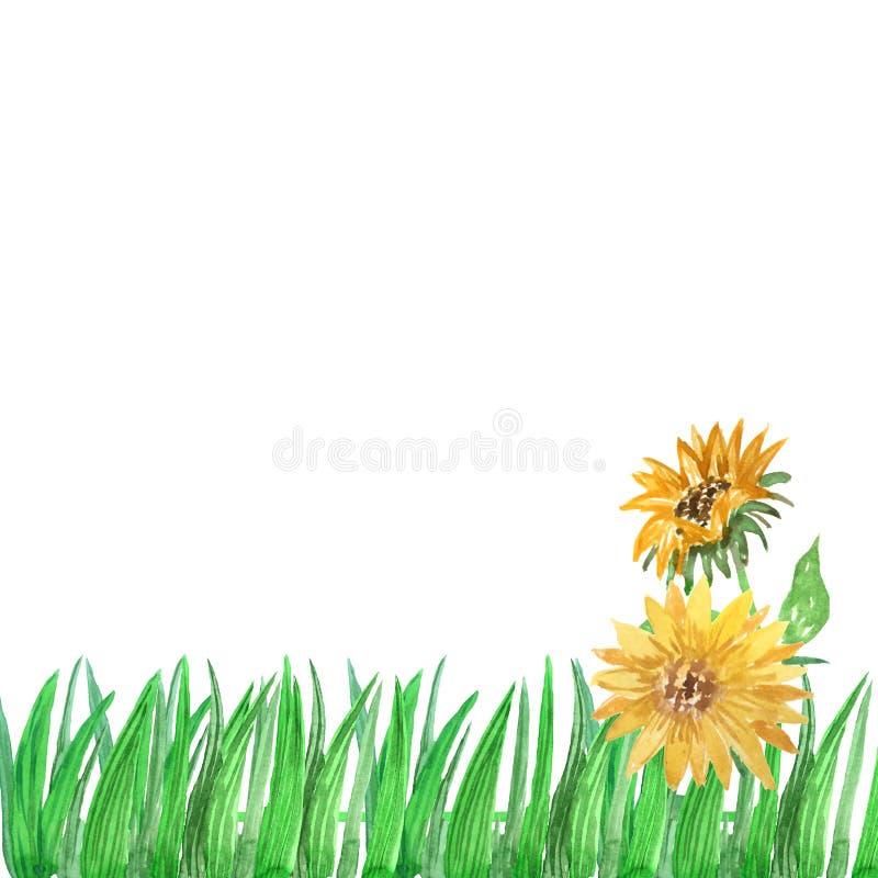 Vattenfärggräsram med solrosor på en vit bakgrund stock illustrationer