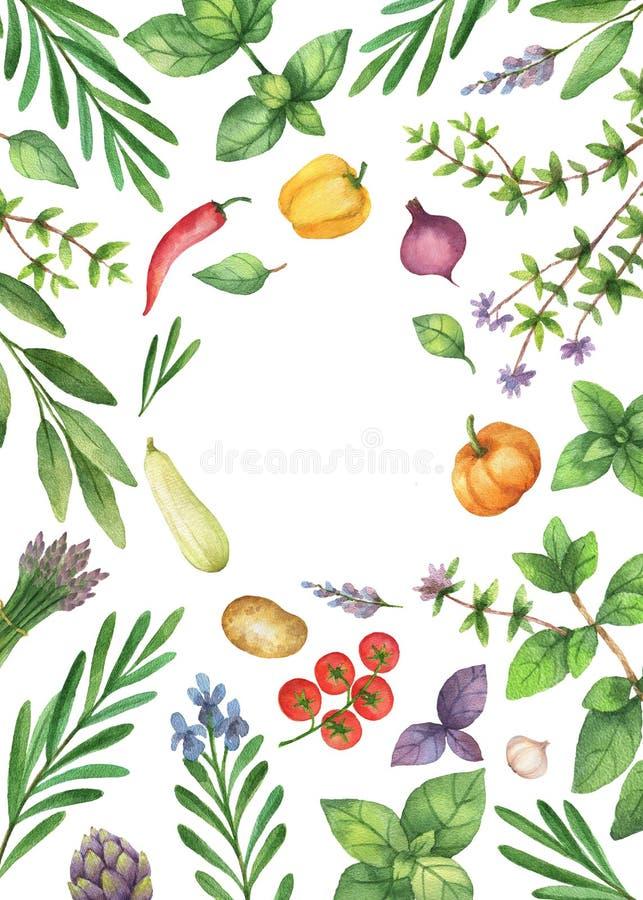 Vattenfärggrönsaker och örter som isoleras på vit bakgrund stock illustrationer