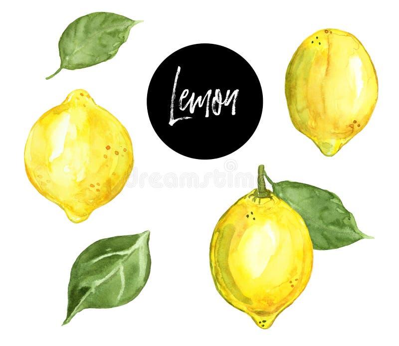Vattenfärghanden målade citronfrukter som isolerades på vit bakgrund Ny mogen gul citrus illustration Sund mat f?r sommar stock illustrationer