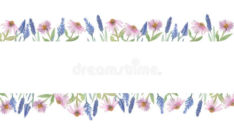 Vattenfärghandsammansättning, Echinaceaangustifolia och purpleBeautiful vattenfärgram för lavendel med blåa lavendelblommor och p stock illustrationer