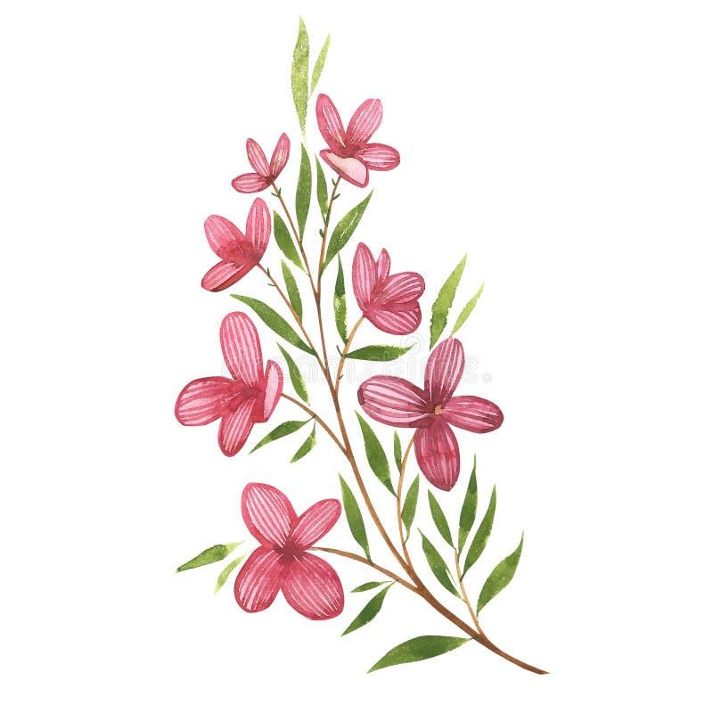 Vattenfärgillustration av blommor, sommartryck Vattenfärgrosa färguppsättning av beståndsdelar för dag för valentin` s Urklippsbo stock illustrationer