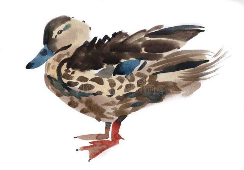Vattenfärgillustration av en fågeland stock illustrationer