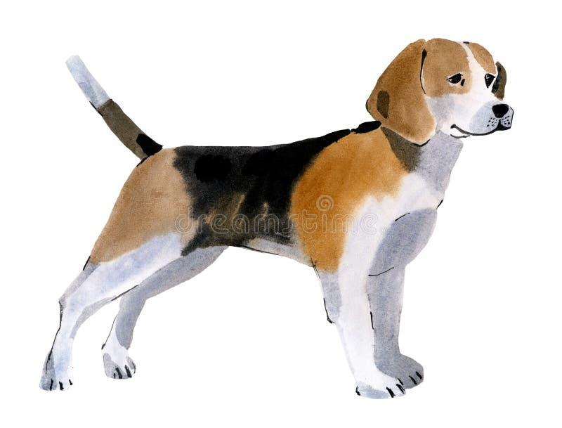 Vattenfärgillustration av en hundbeagle i vit bakgrund royaltyfri illustrationer
