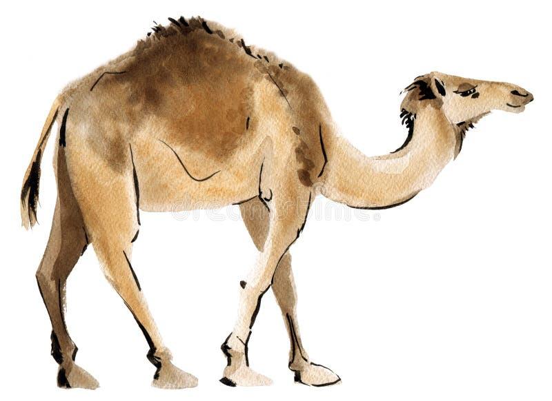 Vattenfärgillustration av en kamel royaltyfri illustrationer