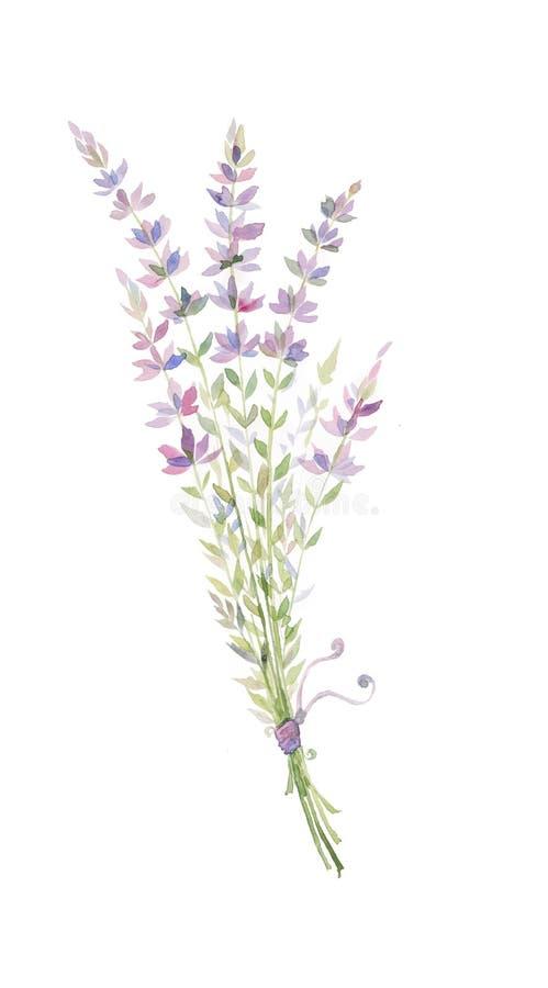 Vattenfärgillustration av en kvist av lavendel, en bukett av purpurfärgade blommor royaltyfri illustrationer