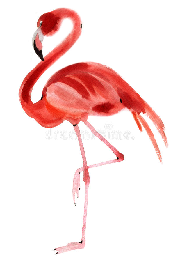 Vattenfärgillustration av flamingo i vit bakgrund royaltyfri illustrationer