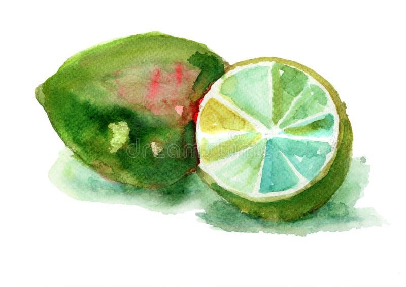 Vattenfärgillustration av limefrukter stock illustrationer