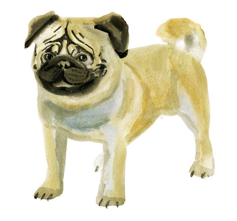 Vattenfärgillustration av hundmops i vit bakgrund stock illustrationer