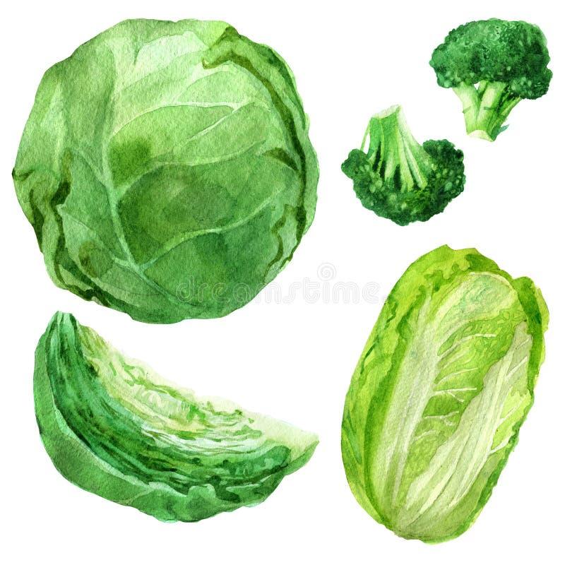 Vattenfärgillustration, uppsättning Bild av grönsaker, kål, broccoli stock illustrationer