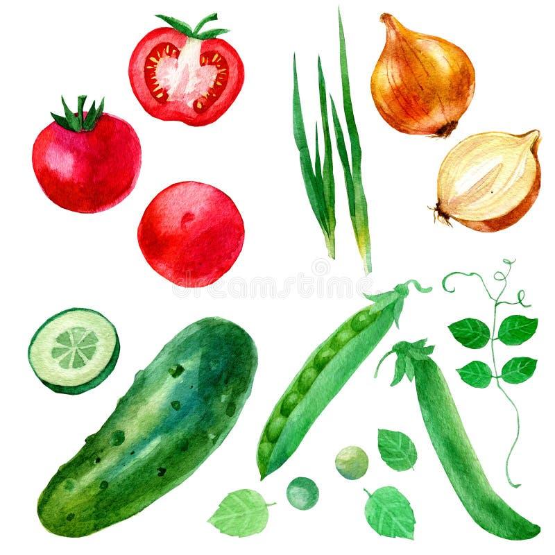 Vattenfärgillustration, uppsättning, bild av grönsaker, lökar, ärtor, gurkor och tomater vektor illustrationer