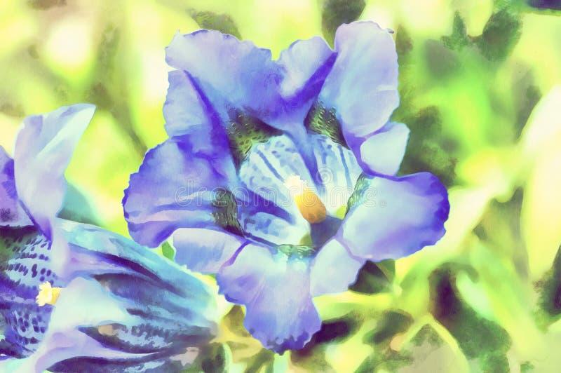Vattenfärgillustrationen av gentiana blått för trumpeten fjädrar blomman vektor illustrationer