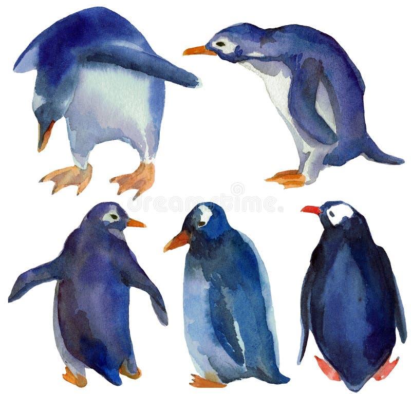 Vattenfärgilustrationen ställde in av olika blåa pingvin royaltyfri illustrationer