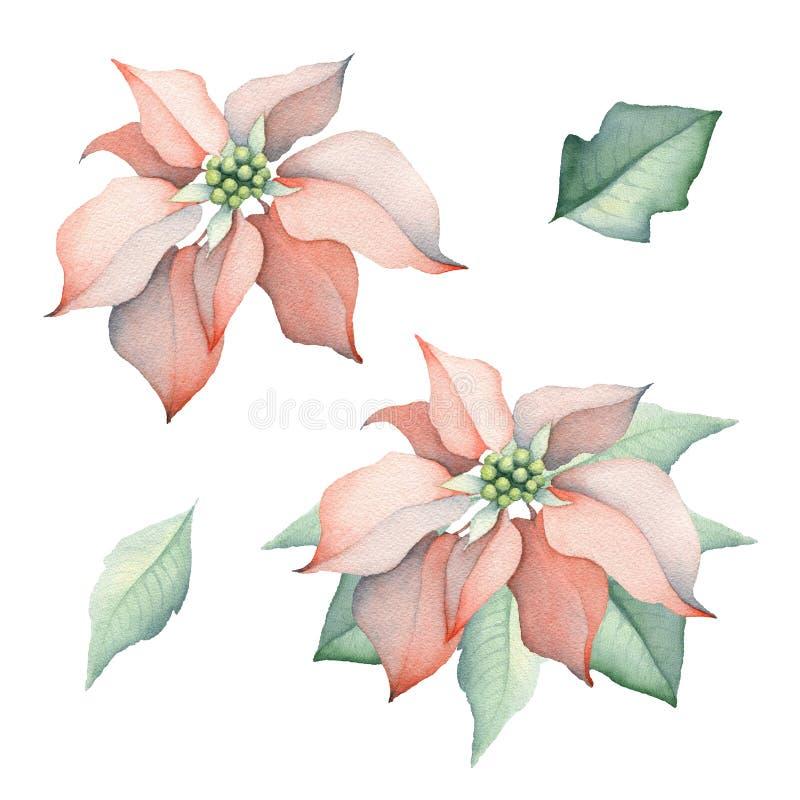 Vattenfärgjulstjärnajul blommar royaltyfri illustrationer