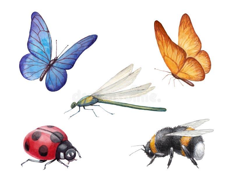 Vattenfärgkrypillustrationer royaltyfri illustrationer