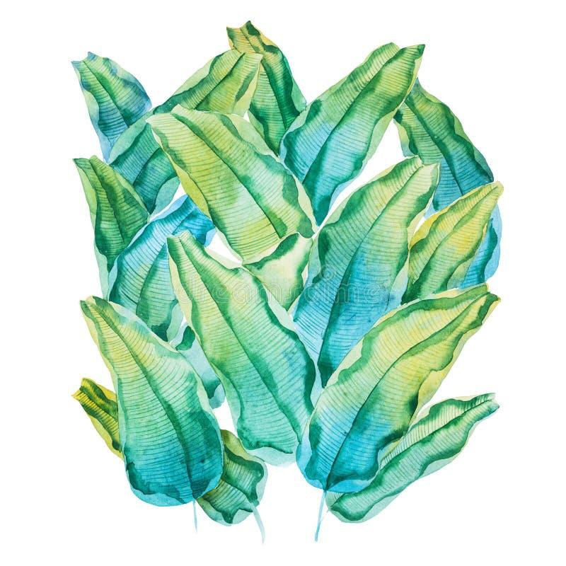 Vattenfärgmålning av gröna tropiska sidor Hand-gjord modell av waringinfikusbenjaminaen som dras på vitbok royaltyfri illustrationer