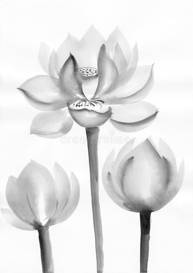 Download Vattenfärgmålning Av Lotusblommablommor Stock Illustrationer - Illustration av dekorativt, målning: 27287914