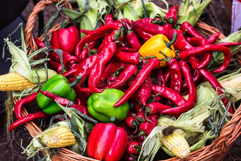 vattenfärgmålning på vit bakgrund Färgrik blandning av peppar för nyast och varmmast chili Glödheta Chili Peppers i träkorg med h royaltyfria foton