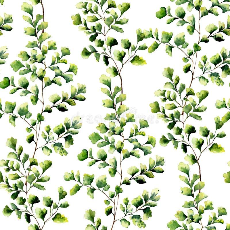 Vattenfärgmaidenhairormbunken lämnar den sömlösa modellen Hand målad ormbunkeprydnad Blom- illustration på vit bakgrund royaltyfri illustrationer