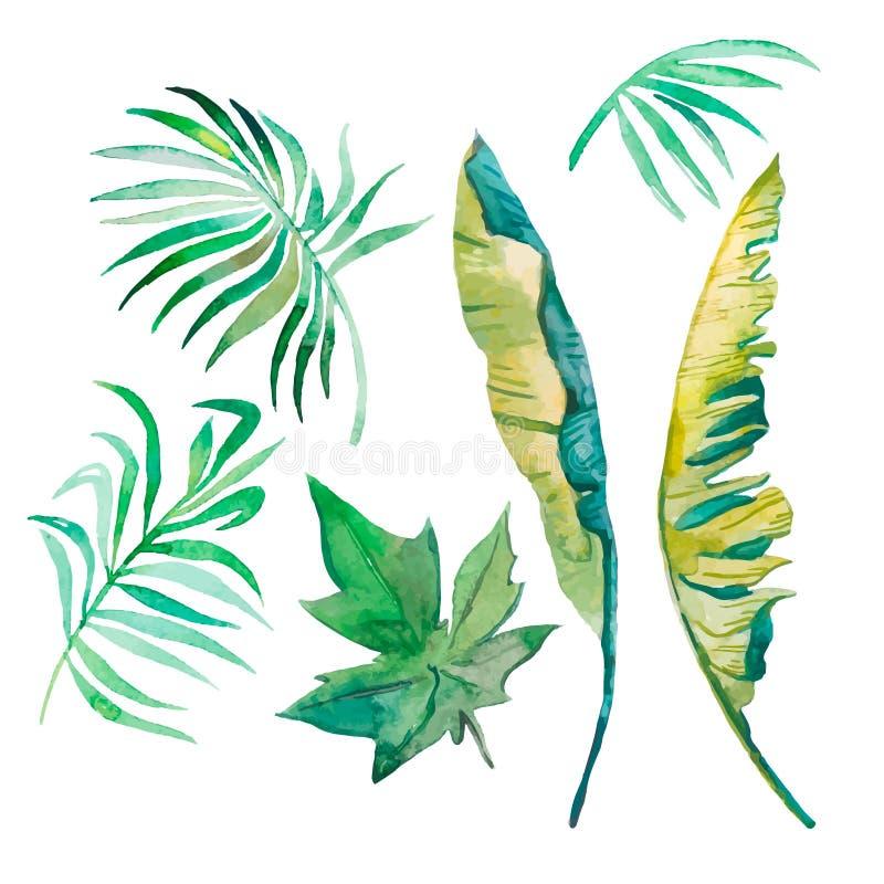 Vattenfärgpalmblad, banansidor, papayasidor som isoleras på vit stock illustrationer