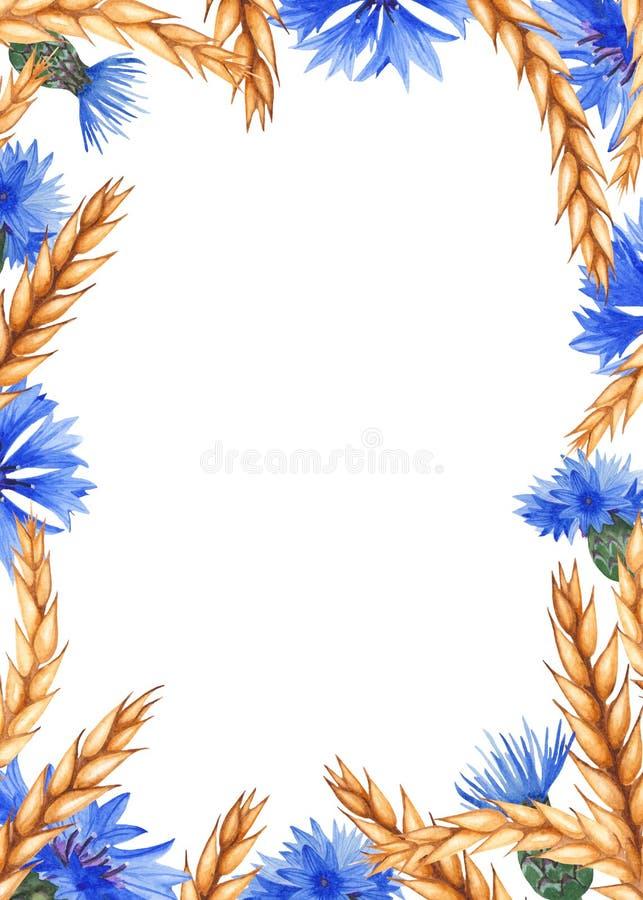 Vattenfärgram med blåklinter och öron av vete stock illustrationer
