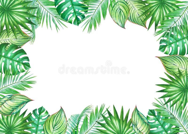 Vattenfärgram med tropiska sidor av kokosnötpalmträdet royaltyfri illustrationer