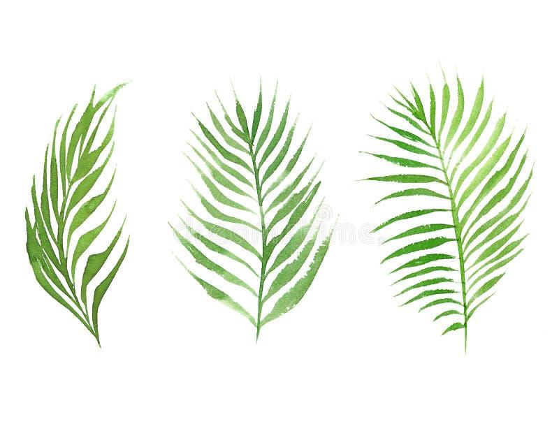 Vattenfärgsamling av kokosnötpalmträdsidor stock illustrationer