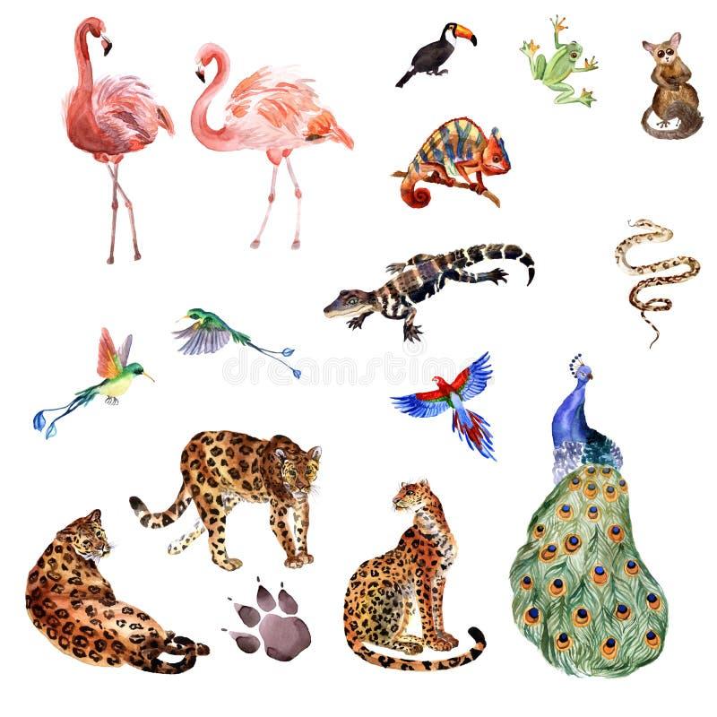 Vattenfärgsamling av tropiska djur som isoleras på en vit bakgrund royaltyfri illustrationer
