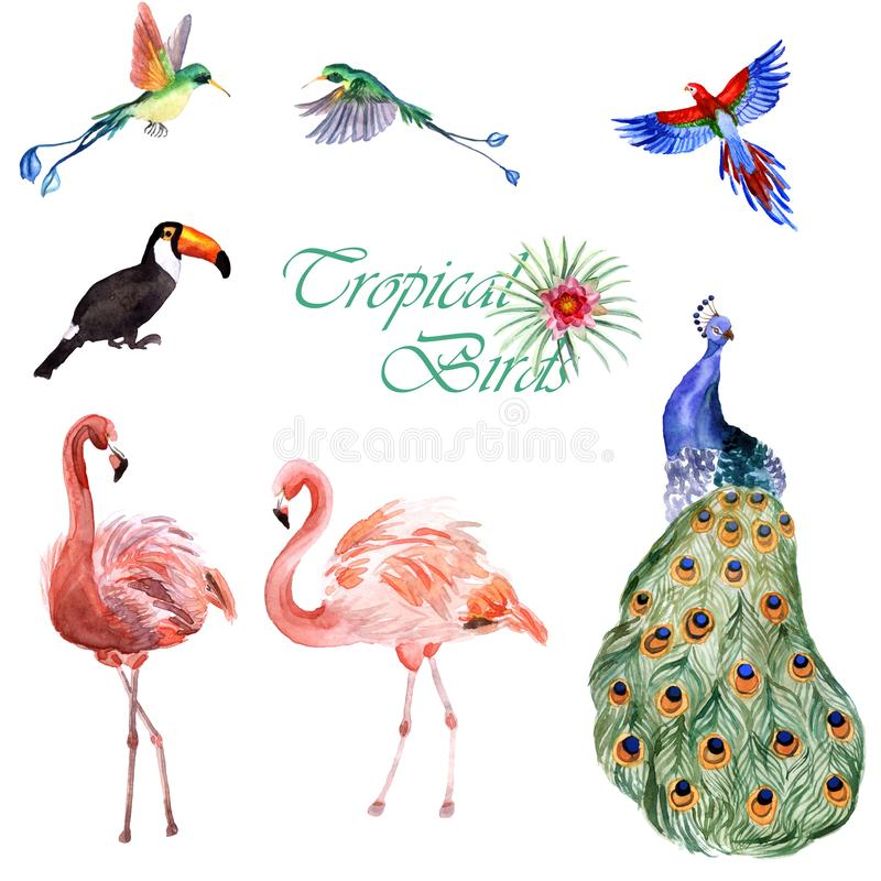 Vattenfärgsamling av tropiska fåglar som isoleras på en vit bakgrund stock illustrationer