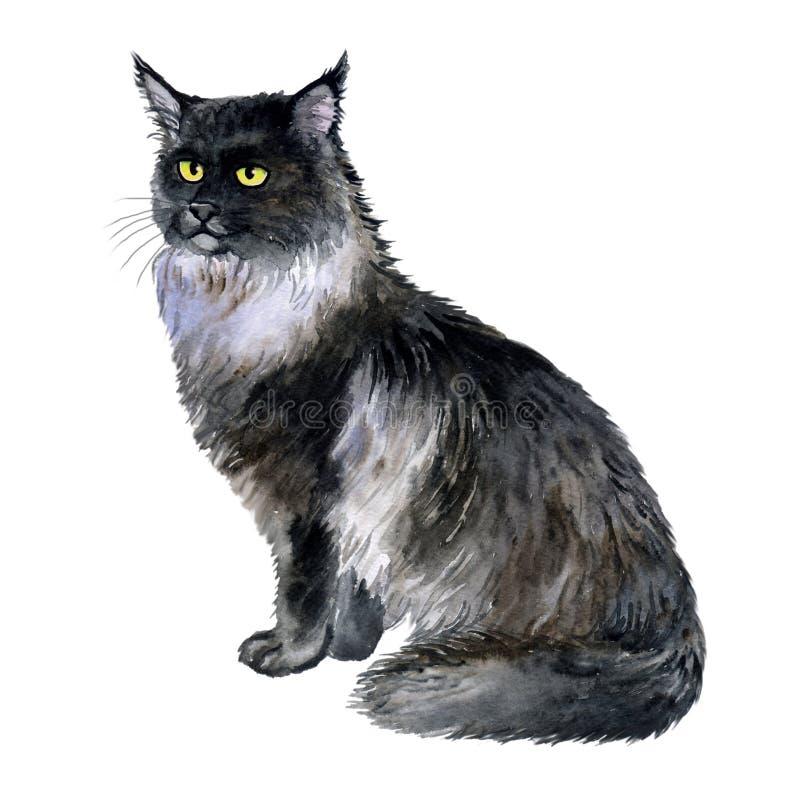 Vattenfärgslut upp ståenden av den amerikanska longhair Maine Coon kattaveln som isoleras på vit bakgrund Ursnygg svart katt Hand vektor illustrationer