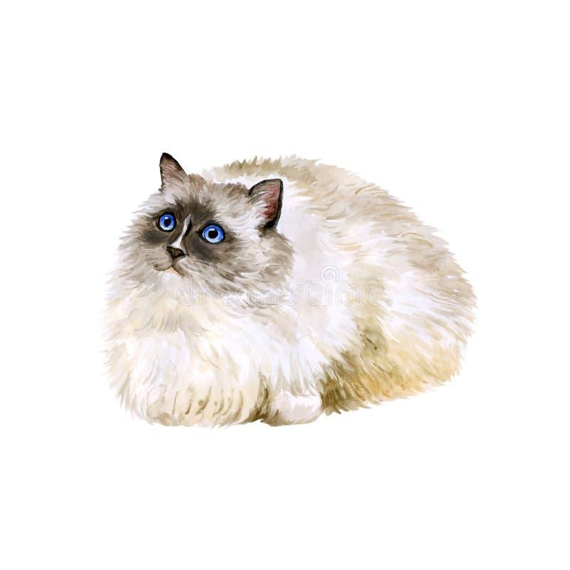 Vattenfärgstående av amerikanen, USA Ragdoll katt på vit bakgrund Hand dragit sött hemhusdjur royaltyfri fotografi