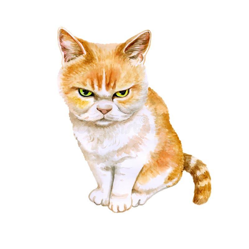 Vattenfärgstående av den japanska ilskna katten för skotsk veckkatt på vit bakgrund Hand dragit sött hemhusdjur stock illustrationer