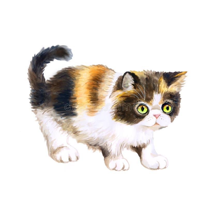 Vattenfärgstående av den persiska tricolor longhair kattungen på vit bakgrund Hand dragit sött hemhusdjur arkivfoto