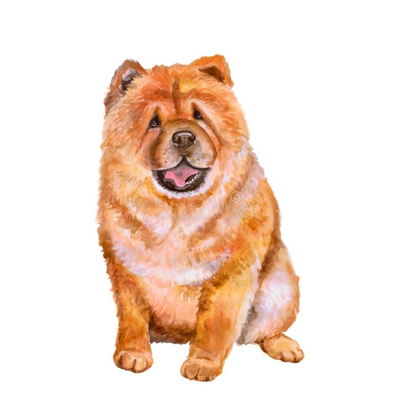 Vattenfärgstående av den röda hunden för kinesChow Chow avel på vit bakgrund Hand dragit sött husdjur arkivbild