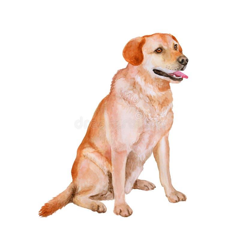 Vattenfärgstående av den röda vita hunden för labradoravelvapen, labb på vit bakgrund Hand dragit husdjur royaltyfri illustrationer