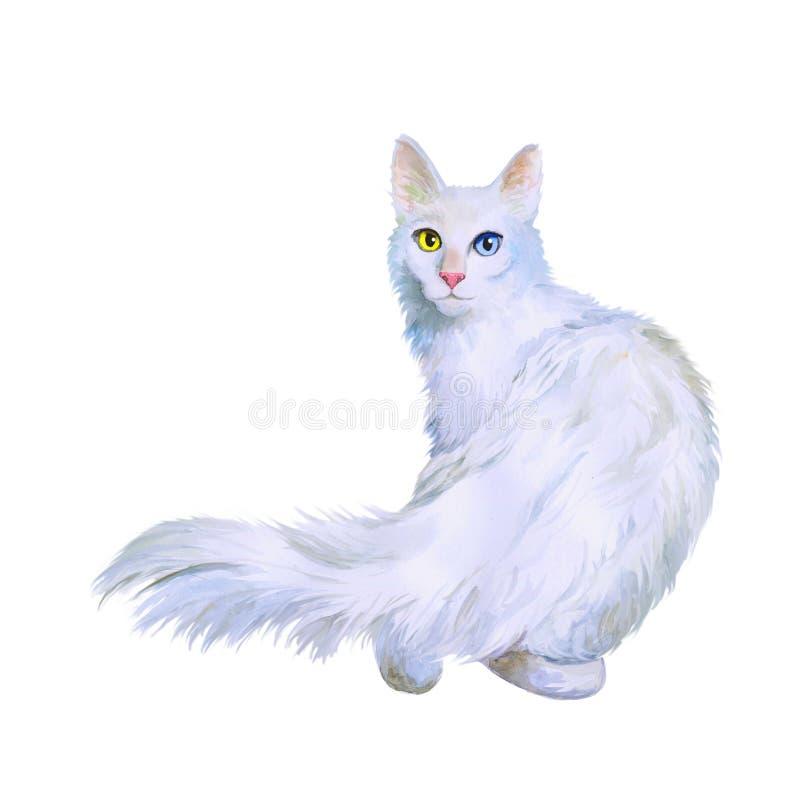 Vattenfärgstående av den turkiska angora- katten med udda ögon på vit bakgrund Hand dragit sött hemhusdjur vektor illustrationer