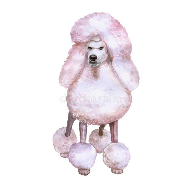 Vattenfärgstående av den vita avelhunden för konung Poodle på vit bakgrund Hand dragit sött husdjur royaltyfri illustrationer