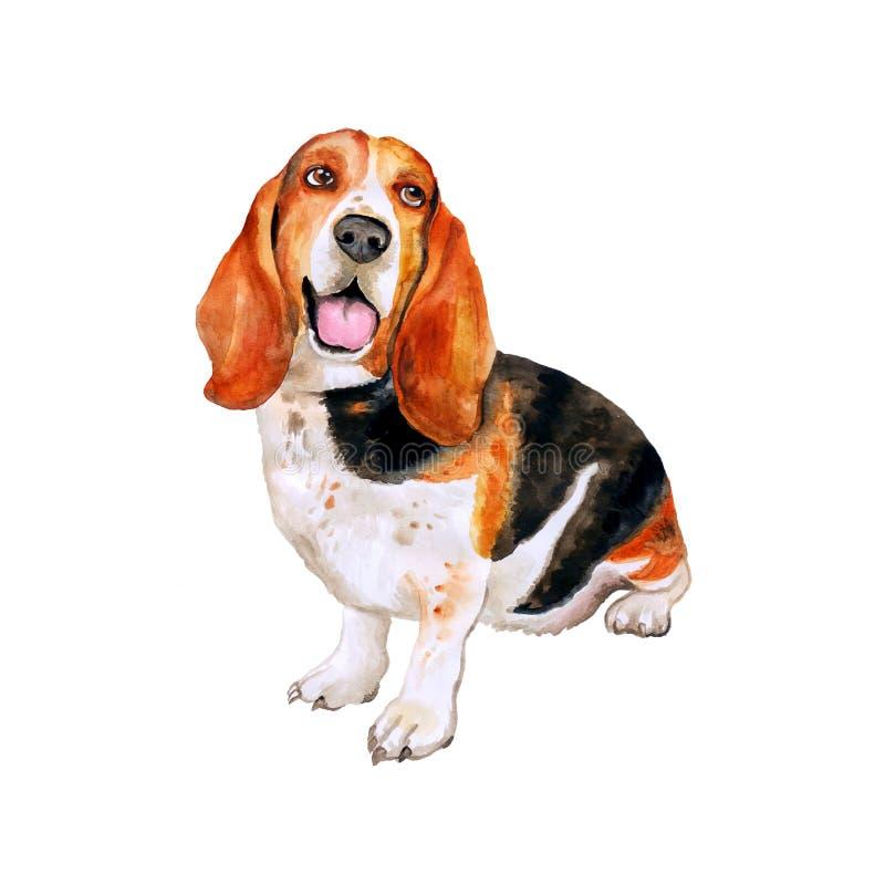 Vattenfärgstående av hund för avel för franska-, engelska- eller brittbassethund på vit bakgrund Hand dragit husdjur royaltyfri fotografi