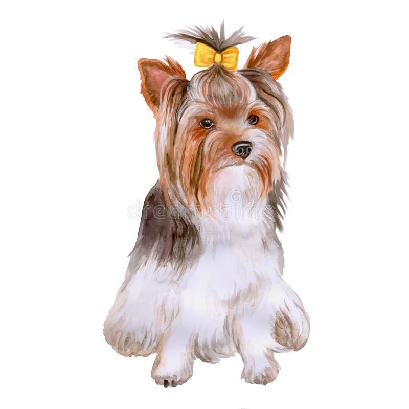 Vattenfärgstående av hunden för avel för Yorkshire terrier, Yorkie på vit bakgrund Hand dragit sött husdjur stock illustrationer