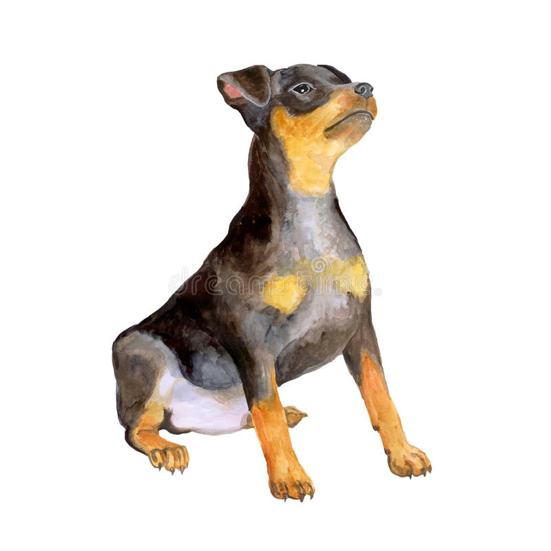 Vattenfärgstående av svart tysk zwergpinscher, miniatyrdobermanavelhund på vit bakgrund stock illustrationer