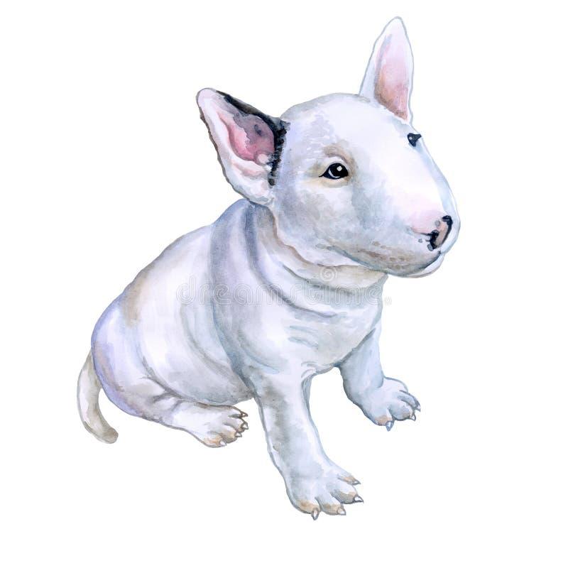 Vattenfärgstående av vitt engelska Bull terrier, den vita stolta avelhundvalpen på vit bakgrund Hand dragen strömbrytare vektor illustrationer