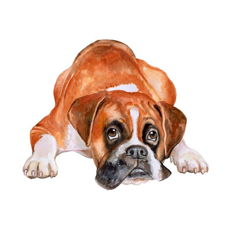 Vattenfärgståenden av lismar tysk, hund för Deutscher boxareavel på vit bakgrund Hand dragit sött husdjur royaltyfri illustrationer