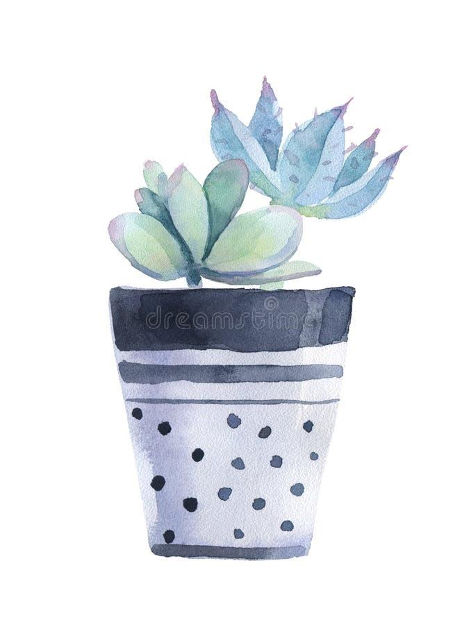 Vattenfärgsuckulent i en blomkruka kvast isolerad white stock illustrationer