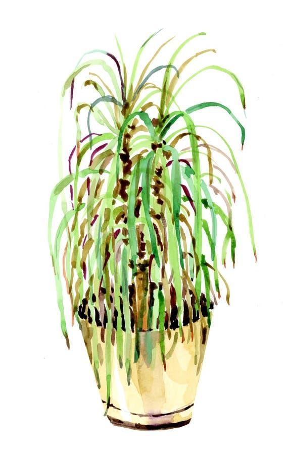 Vattenfärgteckning av en dekorativ blomma i en kruka vektor illustrationer